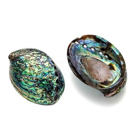 Natural Abalone Shell/Paua ShellDecorationX-SSHEL-F0005-01-1